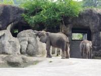 大象<br/> 攝影:Eva隨手拍