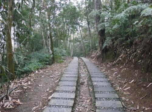青龍山步道-青龍山步道
