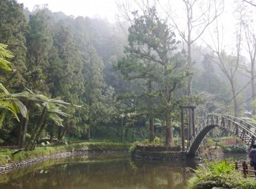 溪頭自然教育園區(溪頭森林遊樂區)-溪頭大學池