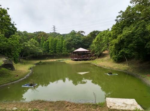 青青草原-景觀生態池