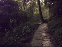 螢火蟲<br/> 攝影:xcatx
