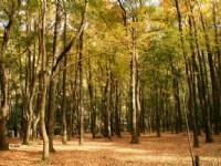 靜瑟的楓香林景觀<br/> 攝影:老山羊部落格