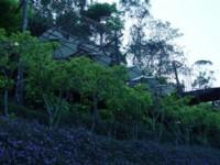馬櫻丹<br/> 攝影:小管