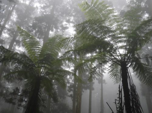溪頭自然教育園區(溪頭森林遊樂區)-往神木途中景觀