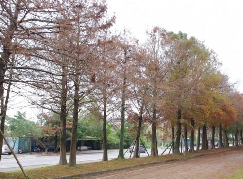 雙園線自行車道