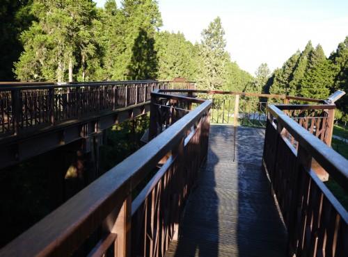 Alishan Forest Recreation Area-201407沼平公園步道觀景台