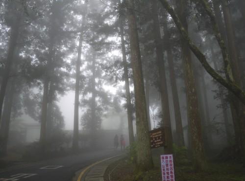 溪頭自然教育園區(溪頭森林遊樂區)-溪頭森林步道
