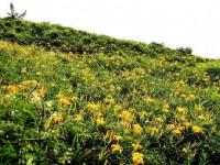 金黃翠綠的山坡<br/> 攝影:簡時強