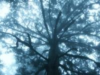樹的太陽傘<br/> 攝影:簡時強
