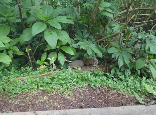 溪頭自然教育園區(溪頭森林遊樂區)-處處有驚喜不太怕生的小動物