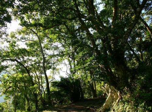知本国家森林游乐区-森林浴步道與榕蔭步道叉路口