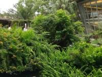 原生應用植物園<br/> 攝影:Louis