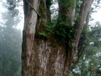 粗壯的樹根<br/> 攝影:余燕鳳