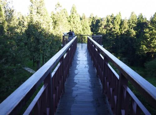 Alishan Forest Recreation Area-201407沼平步道觀景台