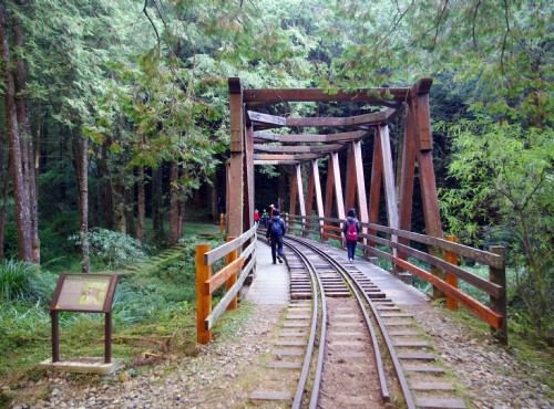 Alishan Forest Recreation Area-水山巨木步道