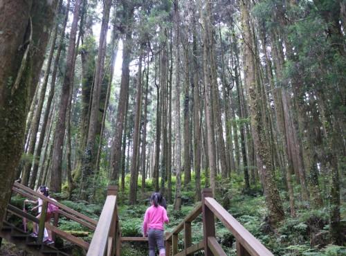 Alishan Forest Recreation Area-201407第一巨木群棧道