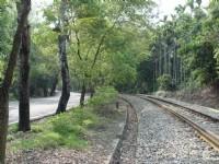 鐵道旁的綠色隧道<br/> 攝影:小管