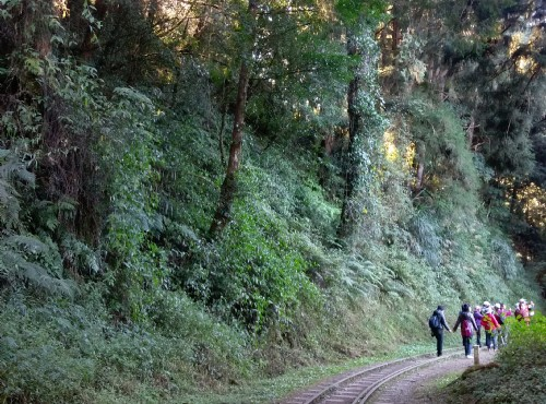 水山巨木步道-水山巨木步道