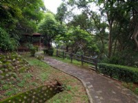 水碓觀景公園的山林步道<br/> 攝影:kavin