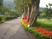 充滿綠意的走道<br/> 攝影:簡時強