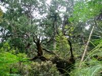 樹枝交錯綠意盎然<br/> 攝影:余燕鳳