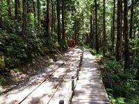 茂密的林木<br/> 攝影:amo