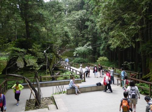 Alishan Forest Recreation Area-201407三代木休憩區