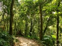 南線的闊葉林步道<br/> 攝影:老山羊部落格