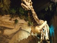 逼真的恐龍化石<br/> 攝影:簡時強