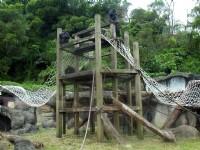 猴子的家<br/> 攝影:amo