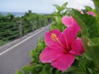東海岸自行車道<br/> 攝影:Eva隨手拍