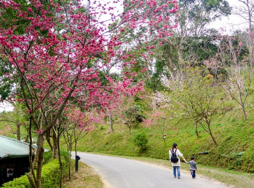 Dongshi Forest Garden (Tungshih Forest)