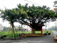榕樹下休憩椅<br/> 攝影:余燕鳳