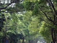 綠色隧道景觀<br/> 攝影:小管