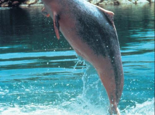 新加坡海底世界-新加坡海底世界之海豚樂園