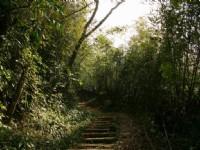 北線步道竹林陡坡<br/> 攝影:老山羊部落格