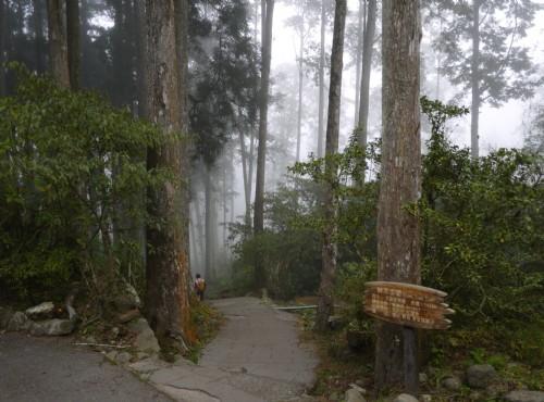 溪頭自然教育園區(溪頭森林遊樂區)-溪頭神木步道