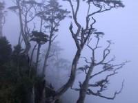 起霧的山林<br/> 攝影:阿英的登山小站