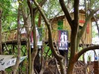 文藝工作樹屋<br/> 攝影:林山景