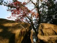 石門的楓葉<br/> 攝影:老山羊部落格