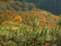 眺望楓香林遊憩區<br/> 攝影:老山羊部落格