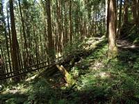 已廢棄森林鐵道<br/> 攝影:amo
