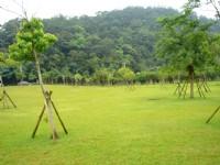 綠地如茵<br/> 攝影:余燕鳳