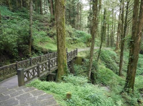 Alishan Forest Recreation Area-201407阿里山森林木橋