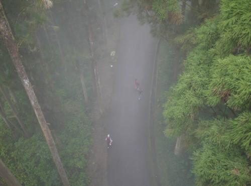 溪頭自然教育園區(溪頭森林遊樂區)-從空中走廊看林間步道