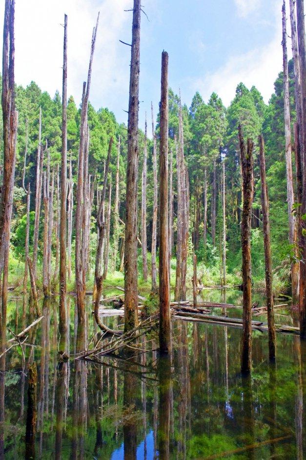 高大筆直的柳杉倒映平靜水面之美著實令人忘憂 / Eva隨手拍