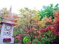 秋意濃、楓葉將轉紅!台灣西部7大賞楓熱區搶先報