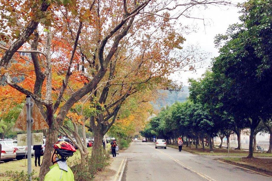 騎乘自行車在石門水庫的楓林步道可就近欣賞楓紅之美 / Leon
