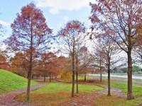 季節限定美景!秋冬必訪落羽松,你還不#Hashtag嗎?