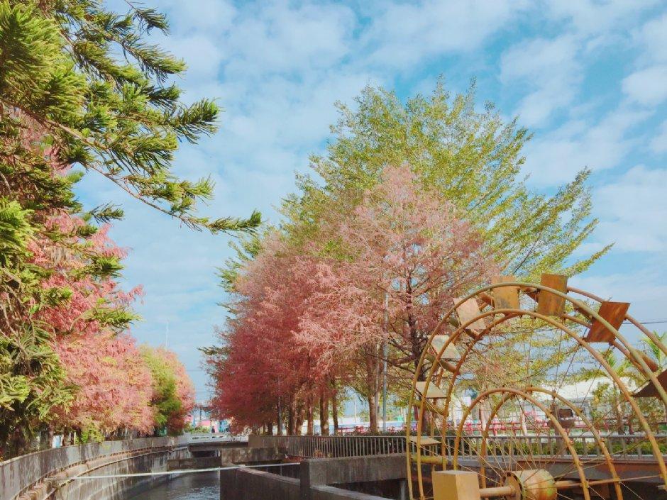農田水利文物陳列館外水圳旁的落羽松美如歐洲 / Hoda 提供